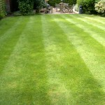 turfing lawn care Chelmsford, Essex